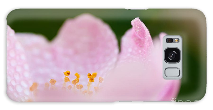 Rose Galaxy S8 Case featuring the photograph Closeup Of A Wet Pink Rose  by Leyla Ismet