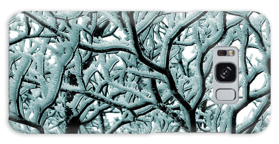 Frosted Tree Galaxy S8 Case featuring the photograph Cold Frosted Limbs Above by Michael Eingle