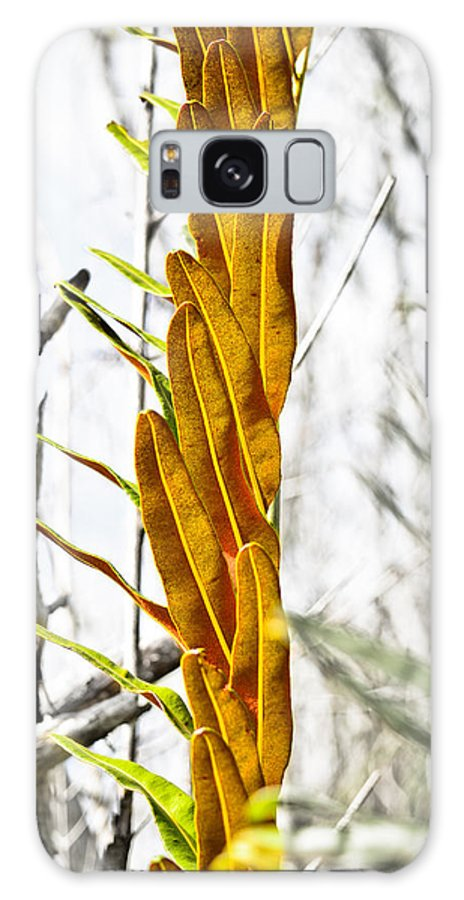 Galaxy S8 Case featuring the photograph Collier-seminole Sp 26 by Becky Anders