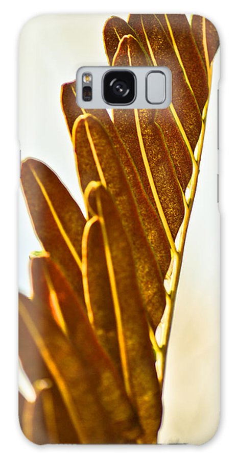 Galaxy S8 Case featuring the photograph Collier-seminole Sp 28 by Becky Anders