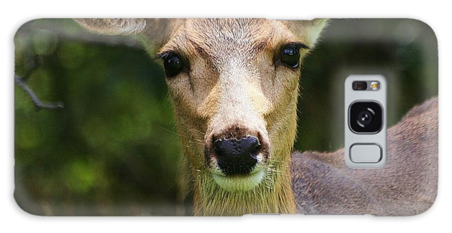 Animal Galaxy S8 Case featuring the photograph Colorado Deer by Ronnie Glover