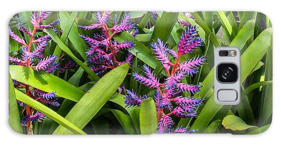 Bromeliad Galaxy S8 Case featuring the photograph Colorful Bromeliad by Douglas Barnett