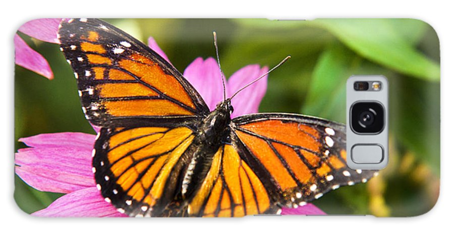 Viceroy Butterfly Galaxy S8 Case featuring the photograph Orange Viceroy Butterfly by Christina Rollo