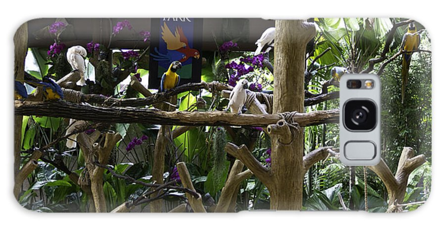 Asia Galaxy S8 Case featuring the photograph Colorful Macaw And Other Birds At The Jurong Bird Park In Singapore by Ashish Agarwal