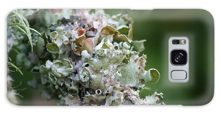 Lichen Galaxy S8 Case featuring the photograph Colorful Nature by Rhonda Burger