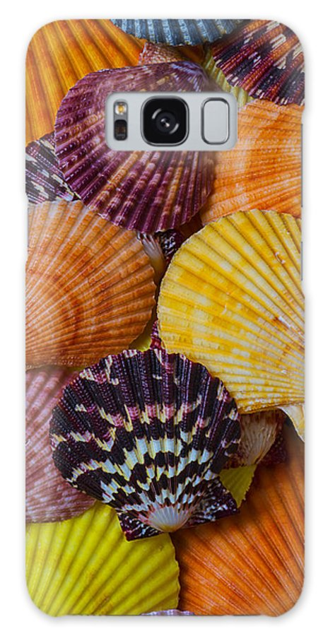 Colorful Shell Galaxy S8 Case featuring the photograph Colorful Shells by Garry Gay