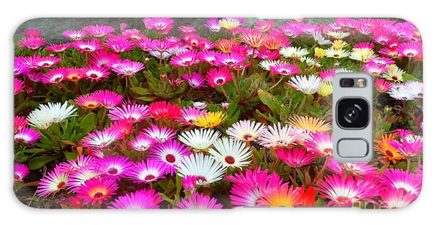 Flowers. Pinks. White. Yellows. Colourful. Landscape. Galaxy S8 Case featuring the photograph Colourful Flowers by Beth Grant