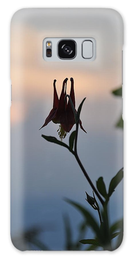 Nature Galaxy S8 Case featuring the photograph Columbine At Sunset by Sherri Quick