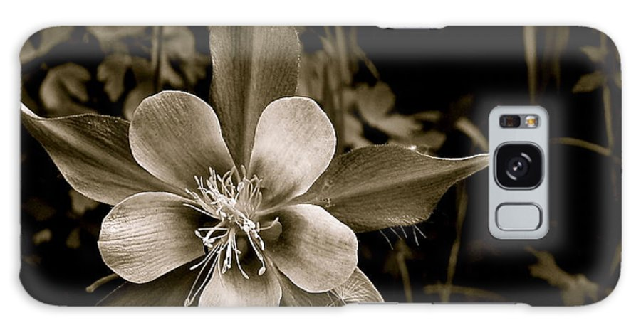 Flower Galaxy S8 Case featuring the photograph Columbine by Kim Pippinger