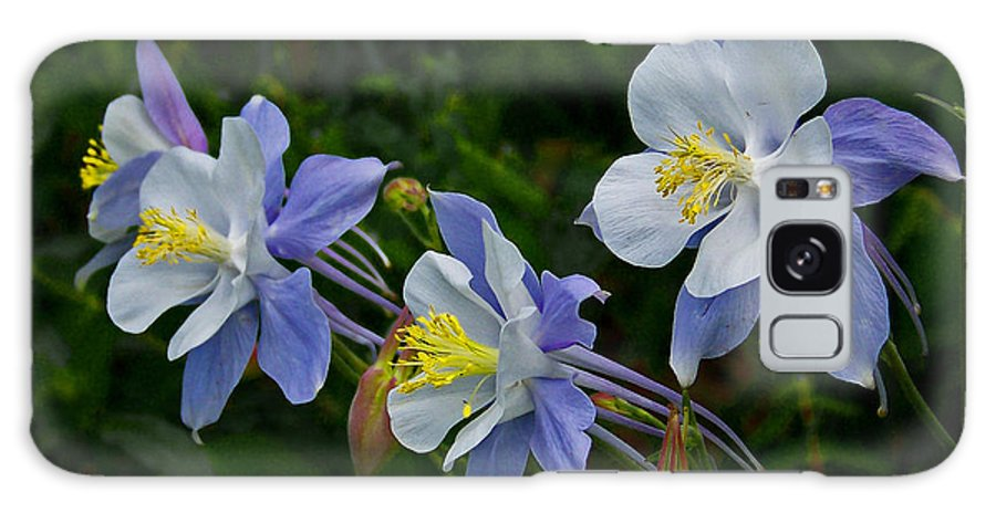 Artwork Galaxy S8 Case featuring the photograph Columbines by Ernie Echols