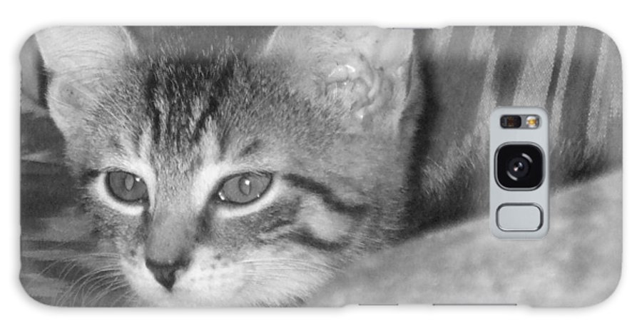 Kitten Galaxy Case featuring the photograph Comfy Kitten by Pharris Art