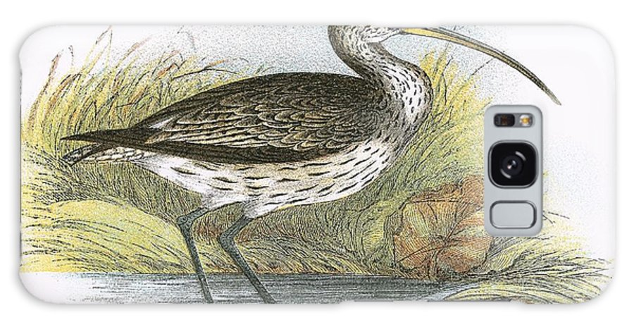 Curlew Galaxy S8 Case featuring the painting Common Curlew by English School