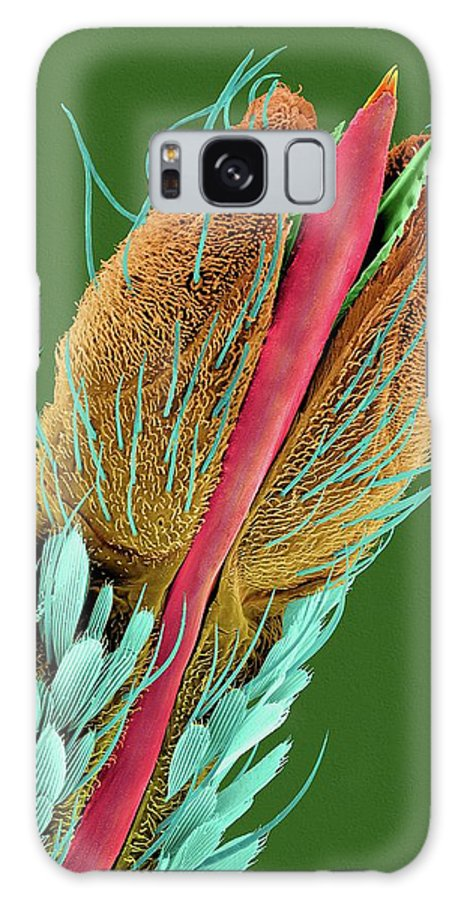 23734c Galaxy S8 Case featuring the photograph Common House Mosquito Proboscis Tip by Dennis Kunkel Microscopy/science Photo Library