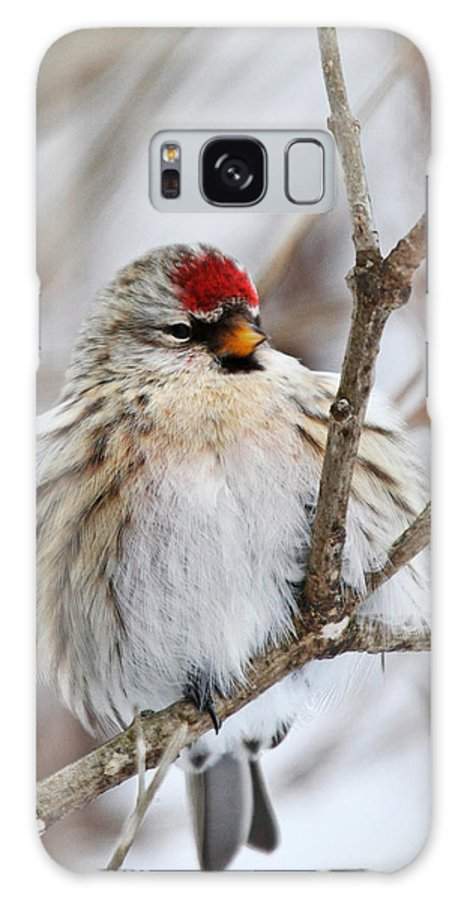Common Redpoll Galaxy S8 Case featuring the photograph Common Redpoll by Jaron Wood