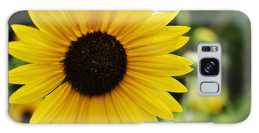 Kansas State Flower Galaxy S8 Case featuring the photograph Common Sunflower by Walter Herrit