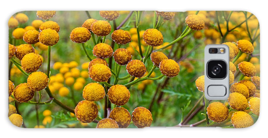 Naturealm Galaxy S8 Case featuring the photograph Common Tansy by Claus Siebenhaar