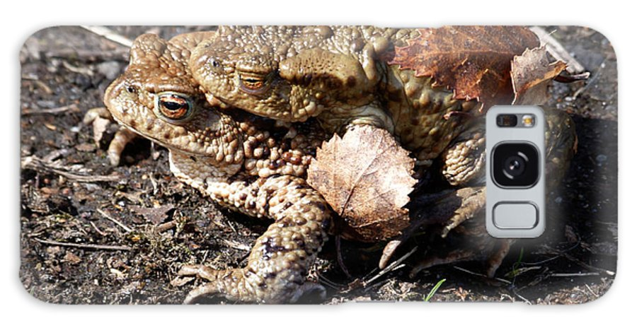 Common Toads Galaxy S8 Case featuring the photograph Common Toads by Phil Banks