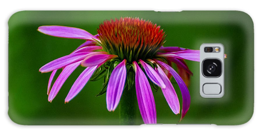 Cone Flower Galaxy S8 Case featuring the photograph Cone #1 by David Tennis