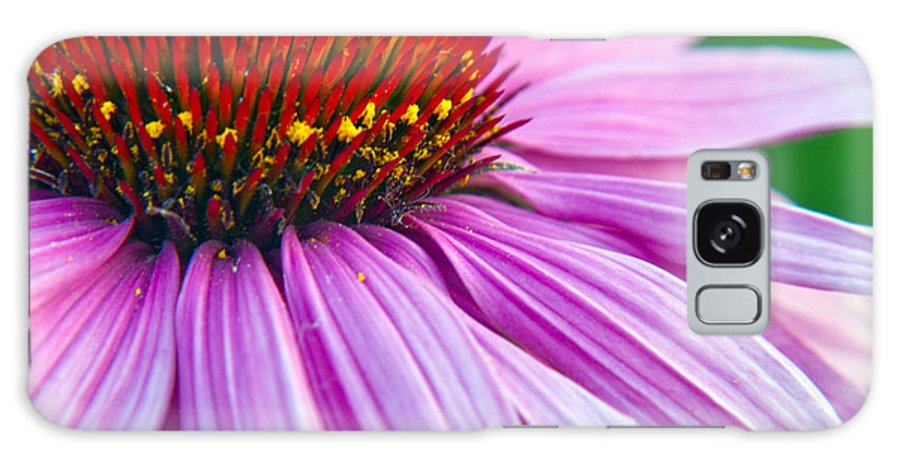 Bloom Galaxy S8 Case featuring the photograph Cone Flower Blossom by Eric Rundle