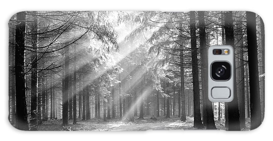 Forest Galaxy S8 Case featuring the photograph Coniferous Forest In Early Morning by Michal Boubin