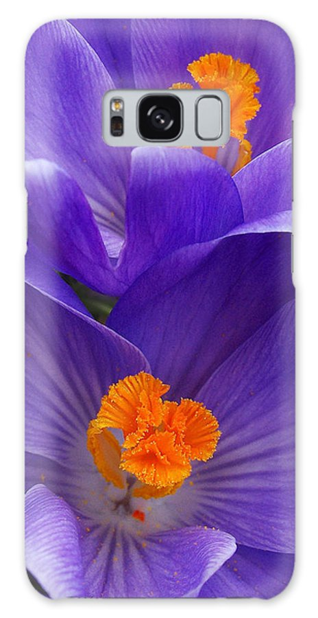 Purple Crocus Flowers Galaxy S8 Case featuring the photograph Contrasting Colors by Kathi Mirto