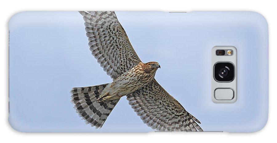Coopers Hawk Bird Of Prey Wildlife Flying Hawk Galaxy S8 Case featuring the photograph Coopers Hawk by David Gardner