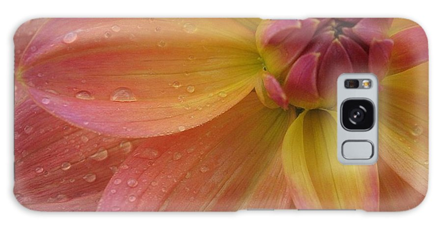 Dahlia Galaxy S8 Case featuring the photograph Coral Beauty Dahlia by Debra Boyle