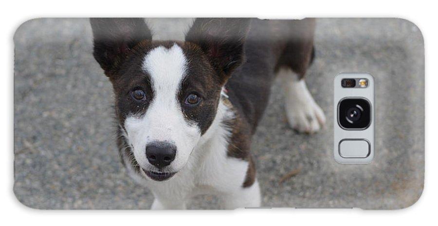 Corgi Galaxy S8 Case featuring the photograph Corgi Puppy by DejaVu Designs