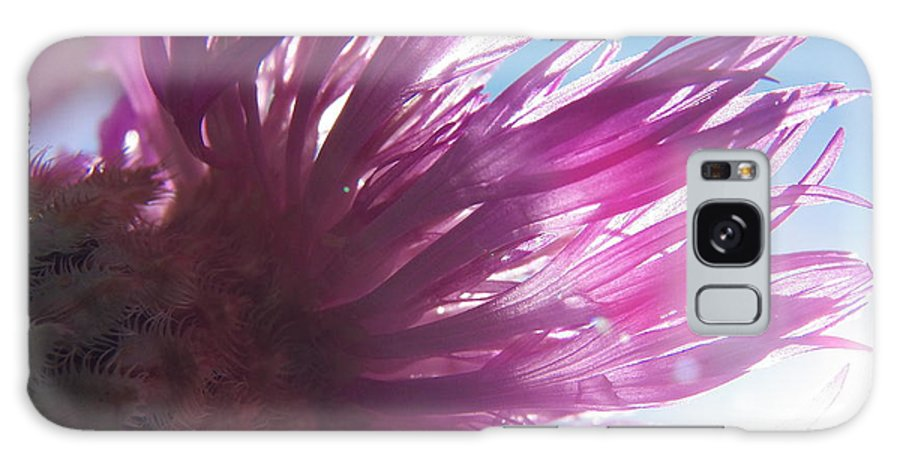 Corn Flower Galaxy S8 Case featuring the photograph Corn Flower And Light by Corinne Elizabeth Cowherd