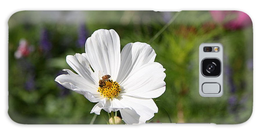 Cosmea Galaxy S8 Case featuring the photograph Cosmea And Bee by Christiane Schulze Art And Photography
