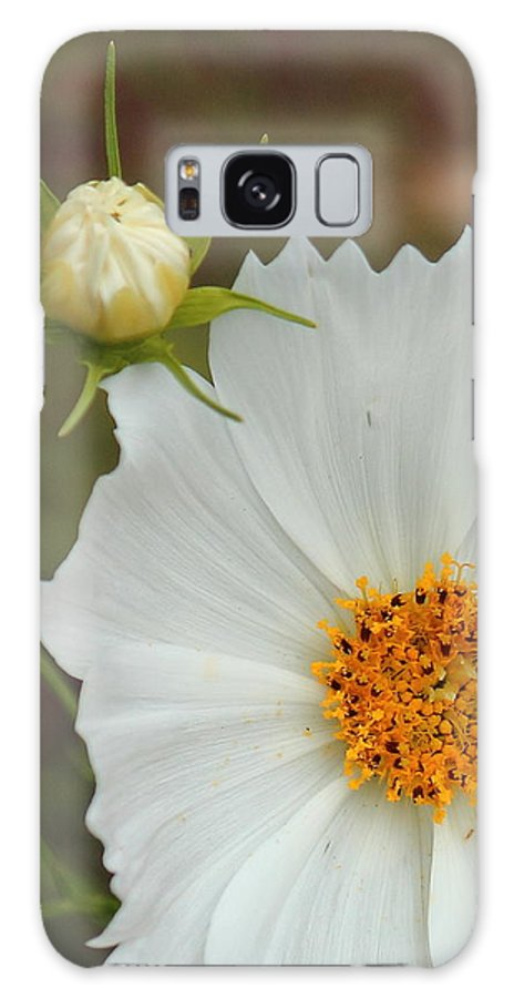 Cosmos Galaxy S8 Case featuring the photograph Cosmos Bud by Karen Beasley