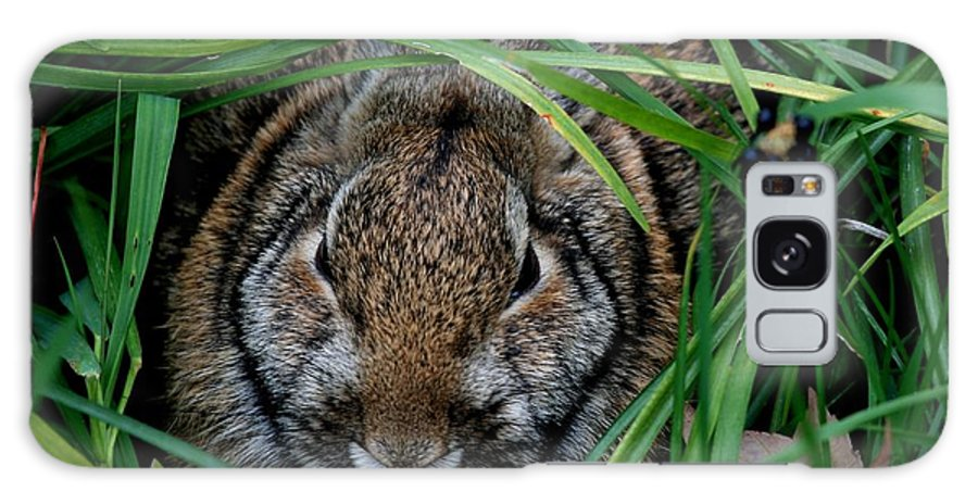 Rabbit Galaxy S8 Case featuring the photograph Cottontail by Lisa Vaccaro