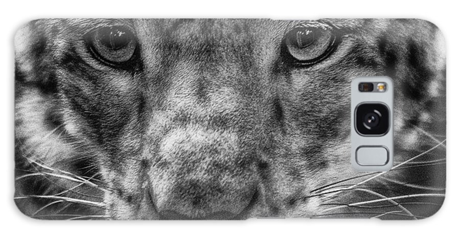 Animal Galaxy S8 Case featuring the photograph Cougar by Lijie Zhou