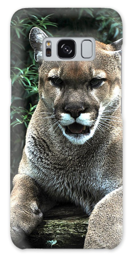 Cougar Galaxy S8 Case featuring the photograph Cougar by Mike Martin