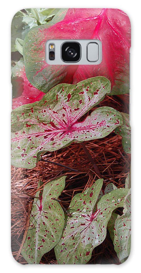 Caladium Galaxy Case featuring the photograph Courtyard Caladium by Suzanne Gaff