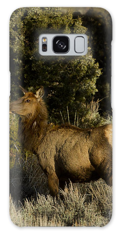 Elk Galaxy S8 Case featuring the photograph Cow Elk  #7582 by J L Woody Wooden