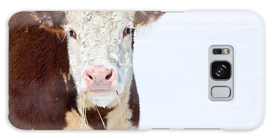 Cow Galaxy S8 Case featuring the photograph Cow - Fine Art Photography Print by James BO Insogna