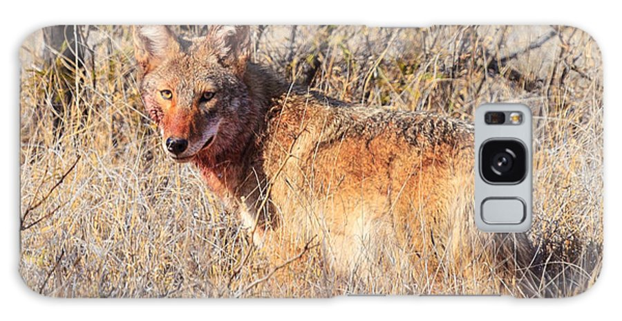 Wildlife Galaxy S8 Case featuring the photograph Coyote by Mark Short