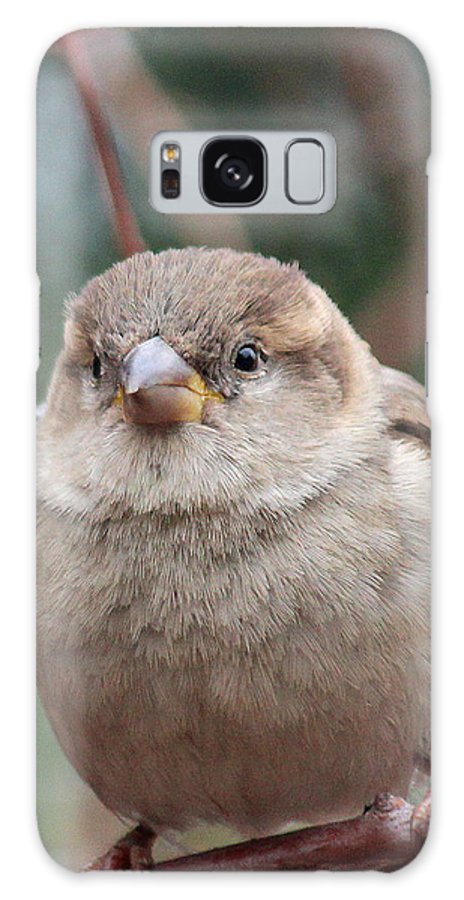 Birds Galaxy S8 Case featuring the photograph Cozy by The Art Of Marilyn Ridoutt-Greene