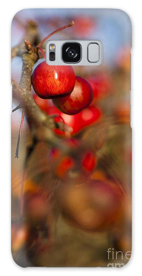 Crab Apples Galaxy S8 Case featuring the photograph Crab Apple Bright by Anne Gilbert