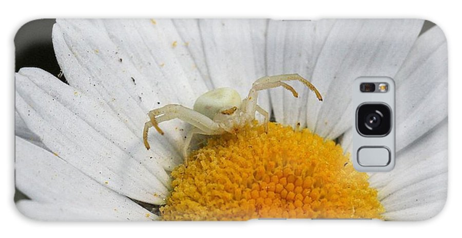 Crab Spider Galaxy S8 Case featuring the photograph Crab Spider On Daisy by Doris Potter