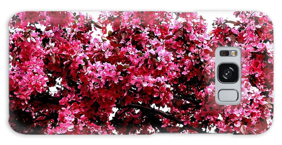 Crabapple Blossoms Galaxy S8 Case featuring the photograph Crabapple Tree Blossoms by Rose Santuci-Sofranko