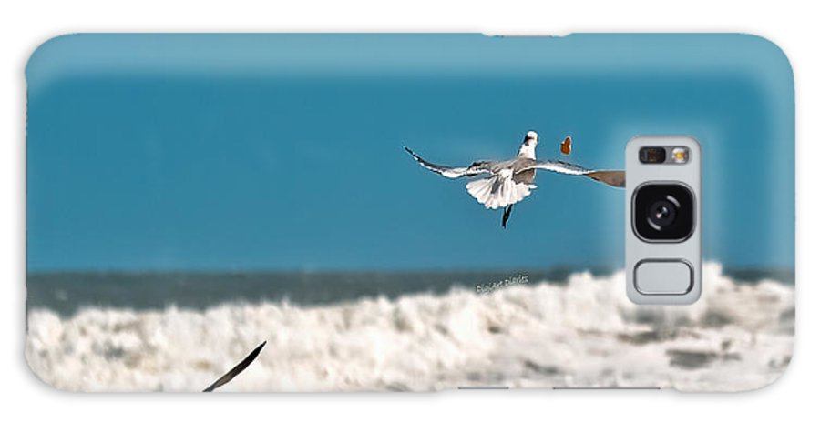 Seagulls Galaxy S8 Case featuring the photograph Cracker Tracker by DigiArt Diaries by Vicky B Fuller