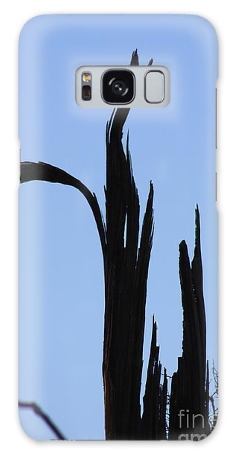 Crane Galaxy S8 Case featuring the photograph Crane Wood by Brandi Maher