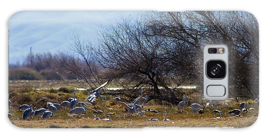 Cranes Galaxy S8 Case featuring the photograph Cranes And Mixed Ducks by Brian Williamson
