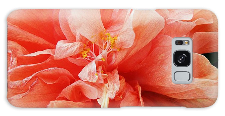 Hibiscus Galaxy S8 Case featuring the photograph Creamsicle Crepe Paper by Renee Trenholm