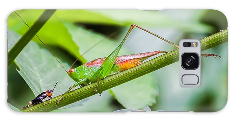 Animals Galaxy S8 Case featuring the photograph Cricket Meets Grasshopper by Craig Lapsley