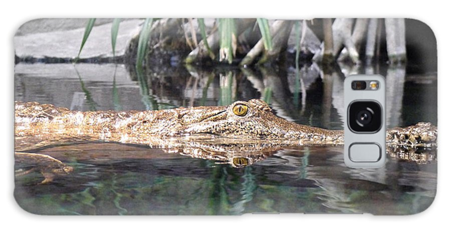 Crocodile Galaxy S8 Case featuring the photograph Crocodile Eyes by Richard Reeve