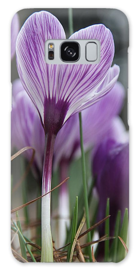 Crocus Galaxy S8 Case featuring the photograph Crocus From Underneath by Wendy Robertson