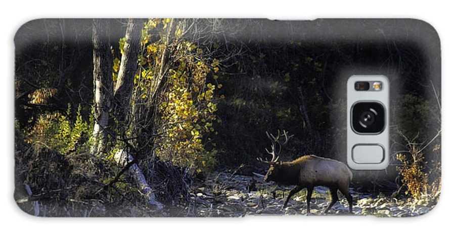 Bull Elk Galaxy S8 Case featuring the photograph Crossing The Buffalo At Daybreak by Michael Dougherty